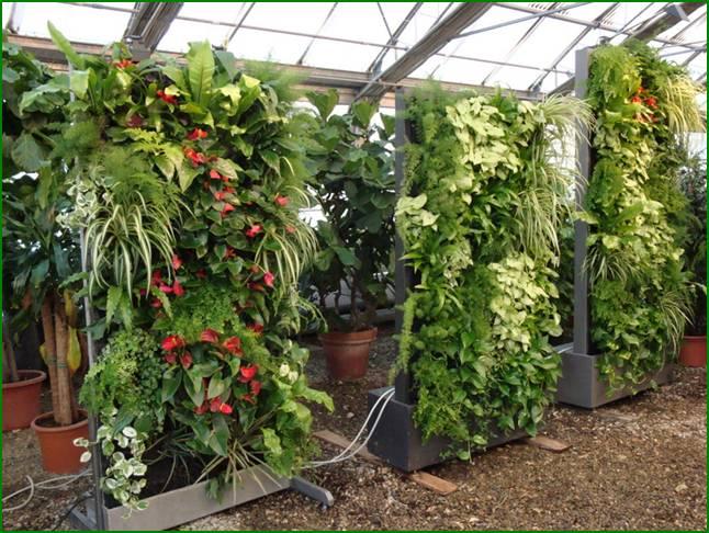 pareti verdi verticali vivai piante menotti melani